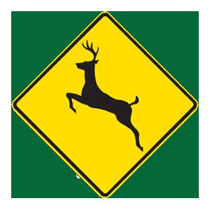 indiana deer crossing